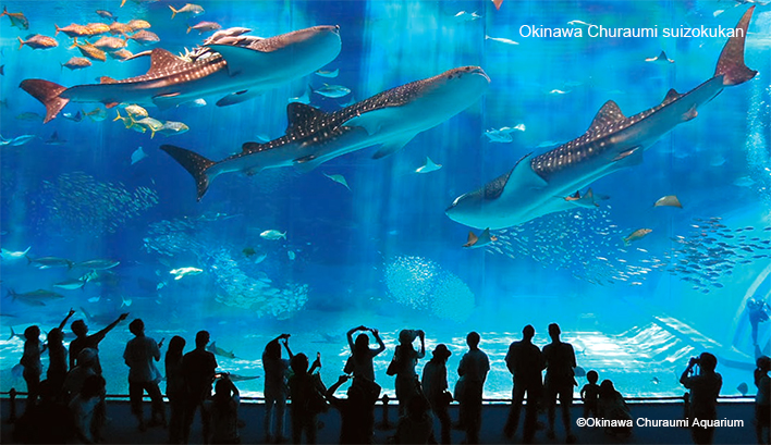 冲绳美丽海水族馆-Okinawa Churaumi Aquarium-