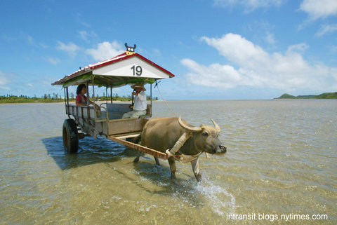 Water Buffalo Cart-intransit.blogs.nytimes.com