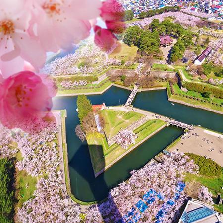 180512 Beautiful Cherry Blossoms