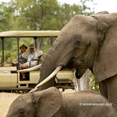 180729 East Africa Safari