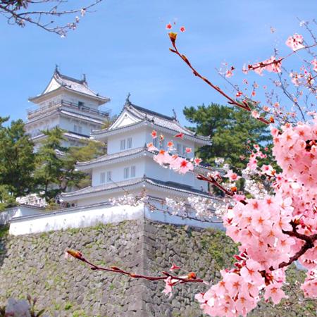 Kyushu Spring Sakura Discovery Tour