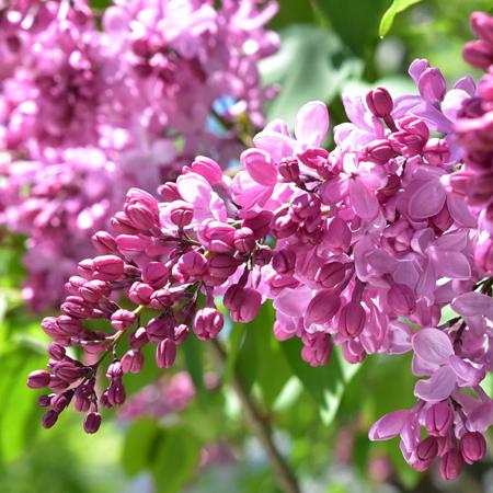 Hokkaido Spring Flower Festival