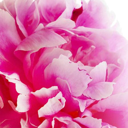 190411 Spring Blossom of China - Peony Festival