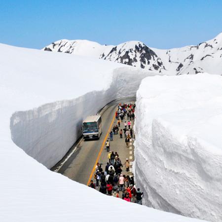 2020.05.09 Japan ALPS ~ Tateyama Kurobe Alpine Route  with Wisteria & Nemophila Viewing