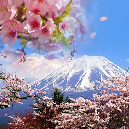 2020.03.23 Cherry Blossoms Tokyo & Osaka
