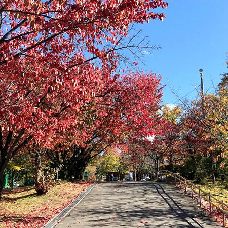 2020.10.06 Autumn Hokkaido