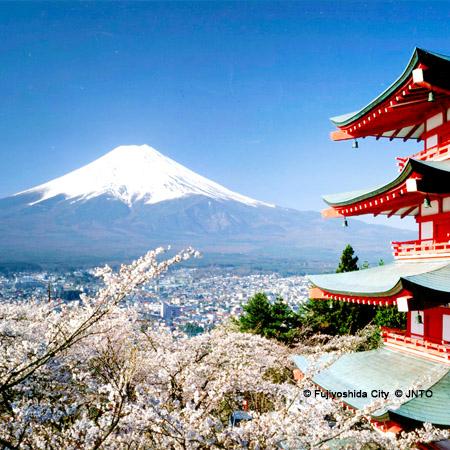 2021.03.26 Cherry Blossom in Osaka & Tokyo