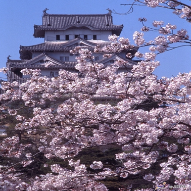 Shikoku Spring Sakura Discovery Tour