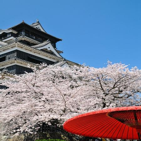 2022.03.22 Kyushu Spring Sakura Discovery Tour